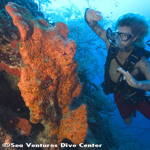 Sea Ventures Dive Center