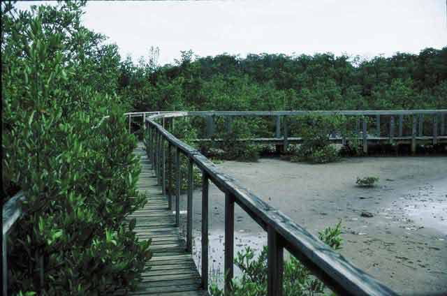 Boqueron Wald