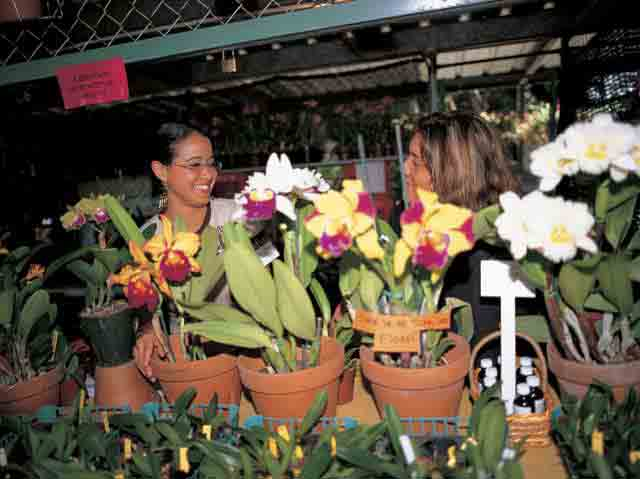 Aibonito Flower Festival