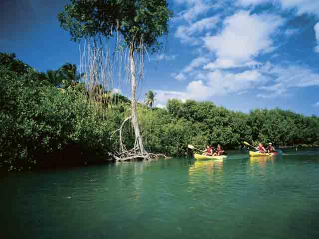 Mangroves/Nivens